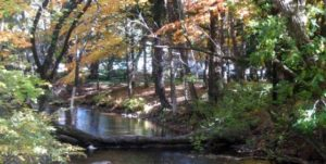 walk along the tranquil Crystal River,