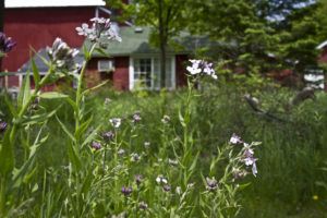 Explore the prairie and native wildflowers.